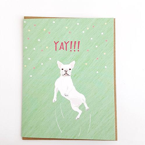 Yay!!! white dog