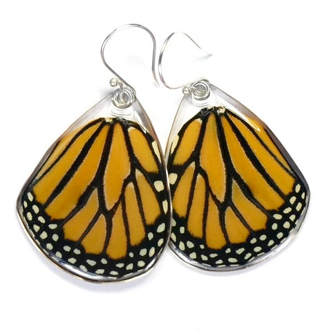 Monarch, bottom wings