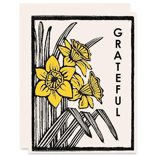 Grateful daffodils