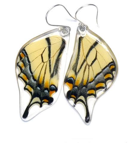 Eastern Tiger Swallowtail Butterfly, bottom wings