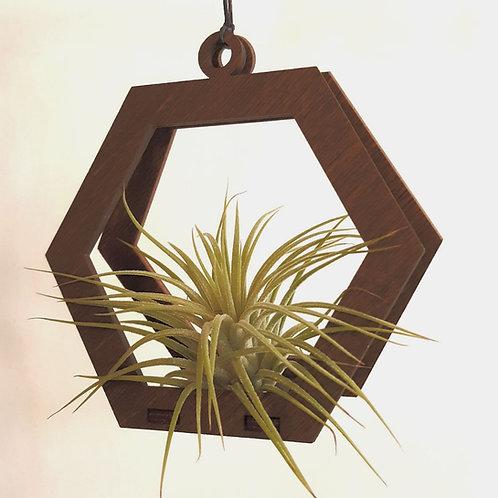 Geometric Air Plant Ornament (Small)