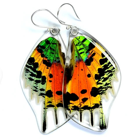 Sunset butterfly, bottom wings