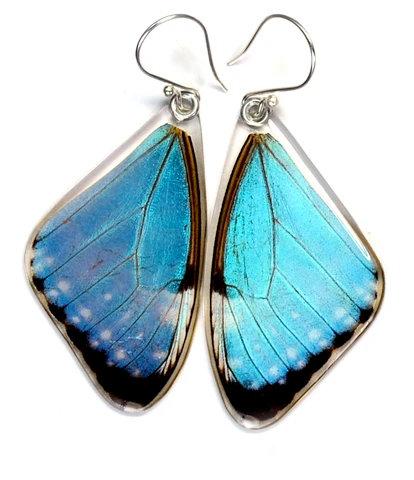 Blue Morpho Portis, top wings