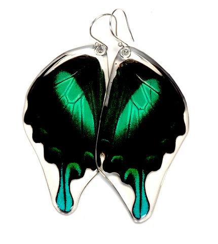 Peacock Swallowtail Butterfly, bottom wings
