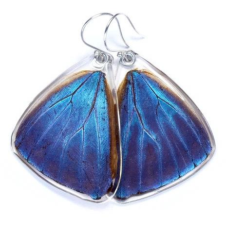 Blue Morpho Adonis, Bottom Wing