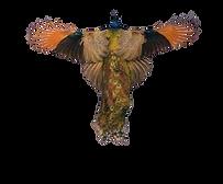 Taouss bird watching morocco