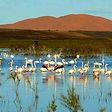 Merzouga Desert Lake