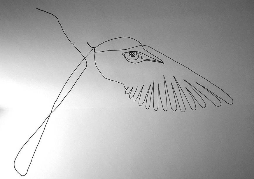 oiseauweb_10-1000jpg