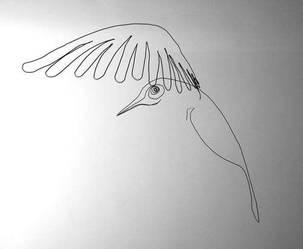 oiseauWeb_18-vi.jpg
