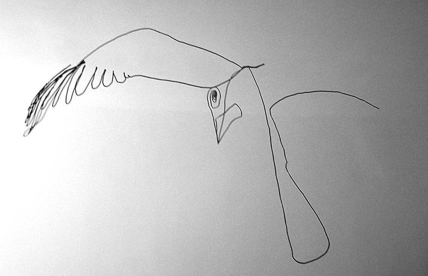 oiseauweb_04-1000jpg