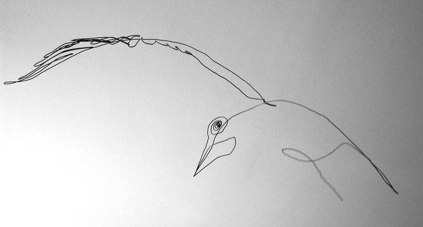 oiseauweb_17-1000jpg