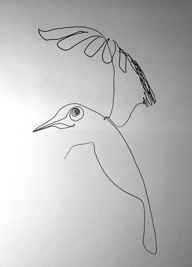 oiseauweb_08-1000jpg