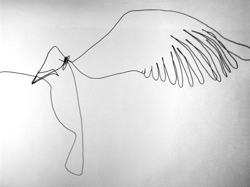 oiseauweb_14-1000jpg