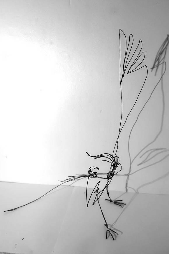 oiseauparadisweb_02-1000jpg