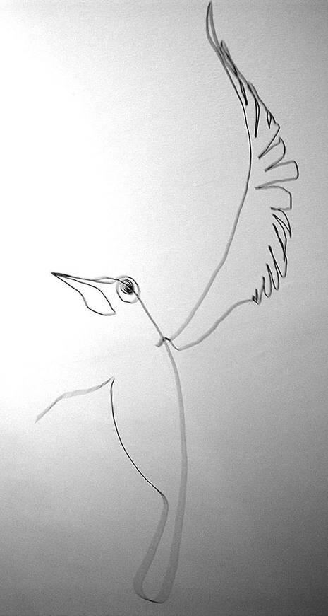oiseauweb_15-1000jpg