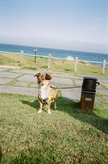 thumbnail_Dog_Busan.jpg