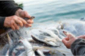 Fishnet image 2.jpg