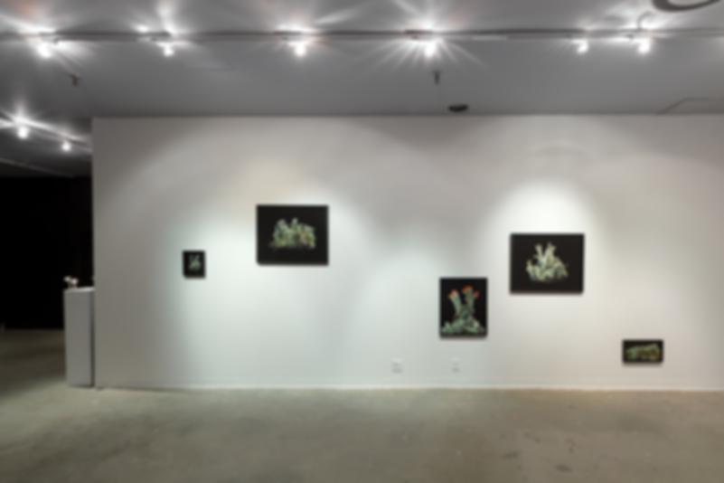 Anna Snyder Fine Art Enlichenment Photography Installation Art
