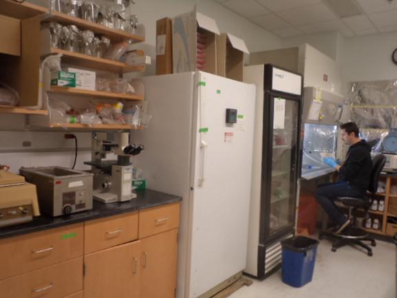 Sancar Lab