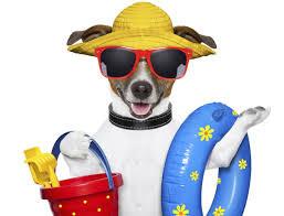 Liste des plages autorisées aux chiens en France
