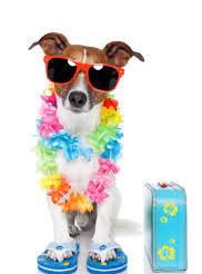 Plages chiens admis, à la côte belge,  en France, en Italie, en Espagne. Piscine, Aqua Park pour chi