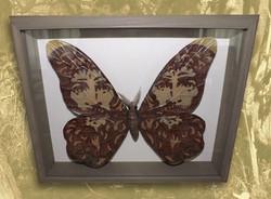 Ad Imagnem Christi Papilio