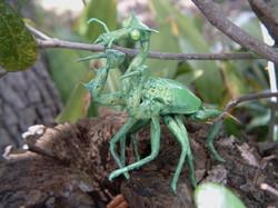 Unidentified Entomological Specimen #18