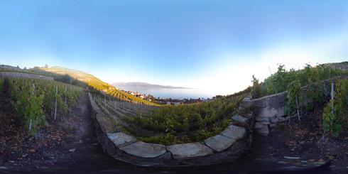 LAVAUX VINEYARD - Switzerland in VR