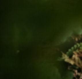 lurk of green.jpg