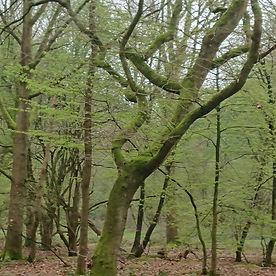 Lone Women in the Woods.jpg