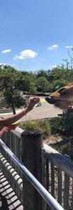 Feeding Giraffe.jpg