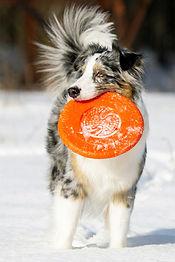 doglike-khabarovsk-igrushki-dlya-sobak.j