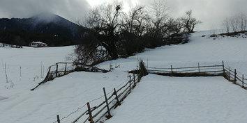Vuoristoniitty Kozharissa • Mountain field in Kozhari