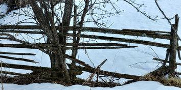 Risuaita vuoriniityllä • An old fence on mountain field