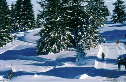 Väloillä leppoisaakin hiihtelyä metsässä. For a while relaxed skiing in the woods.