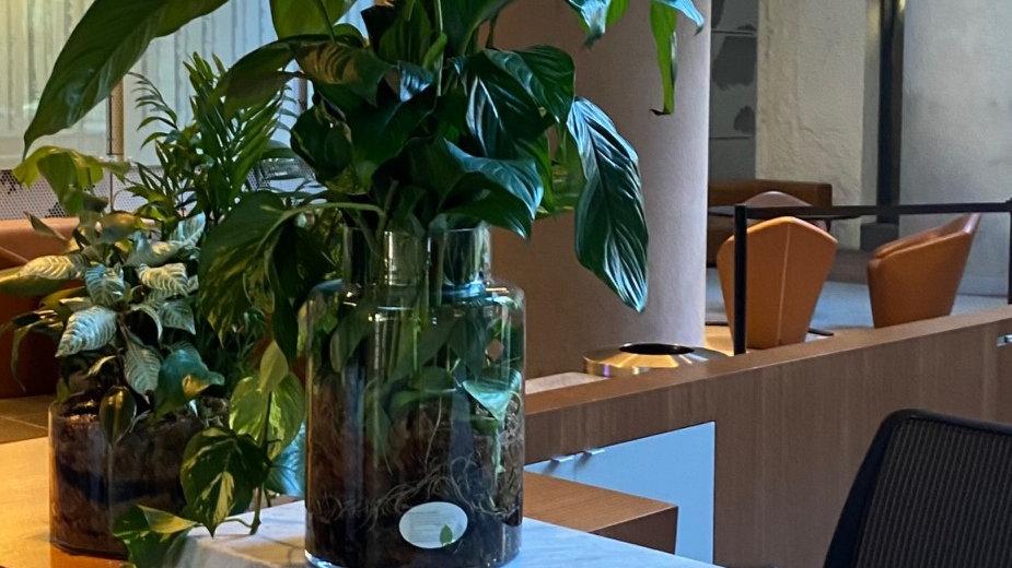 Medium/ Large Desk Top Terrarium