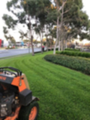 Picture1  LAWN.jpg