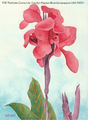 978 'Poolside Canna Lily' Carolyn Pappas @carolynapappas Massachusetts TAE21