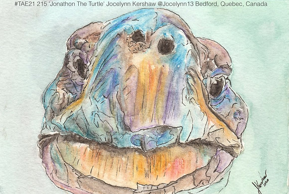 215 'Jonathon The Turtle' Jocelynn Kershaw @Jocelynn13 Quebec, Canada