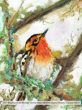 877 'Blackburnian Warbler' Jenny Maton @JAMCalgary Alberta, Canada TAE21
