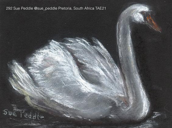 292 Sue Peddle @sue_peddle Pretoria, South Africa TAE21