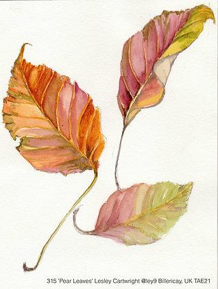 315 'Pear Leaves' Lesley Cartwright @ley9 Billericay, UK TAE21