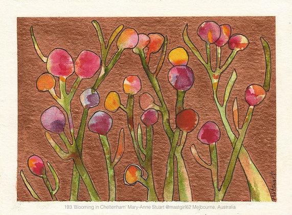 193 'Blooming in Cheltenham' Mary-Anne Stuart @mastgirl62 Melbourne, Australia
