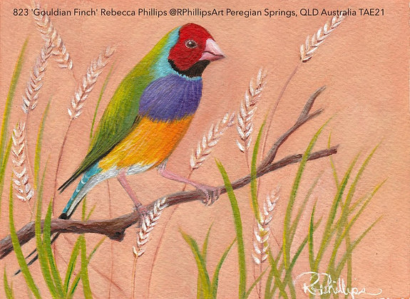 823 'Gouldian Finch' Rebecca Phillips @RPhillipsArt, QLD Aus TAE21