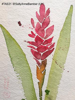 362 'The Ginger Flower' by Sally Bamber @sallyannebamber, Cumbri
