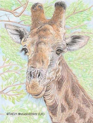 185 'Jolly Giraffe' Lisa Wellwood @studio22artz Somerset, UK