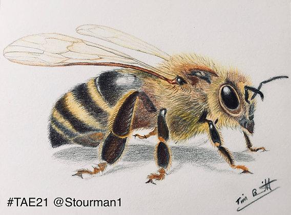 127 'Honey Bee' Tim Barritt @Stourman1 Colchester, UK