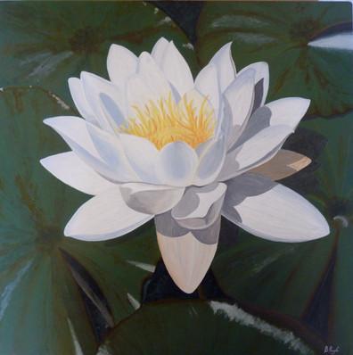 Water Lily acrylic.jpg