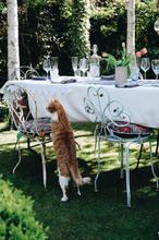 Cat and Garden