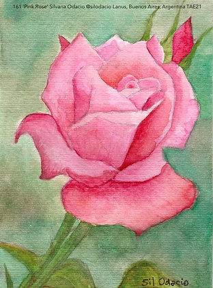 161 'Pink Rose' Silvana Odacio @silodacio,  Buenos Aires, Argentina TAE21